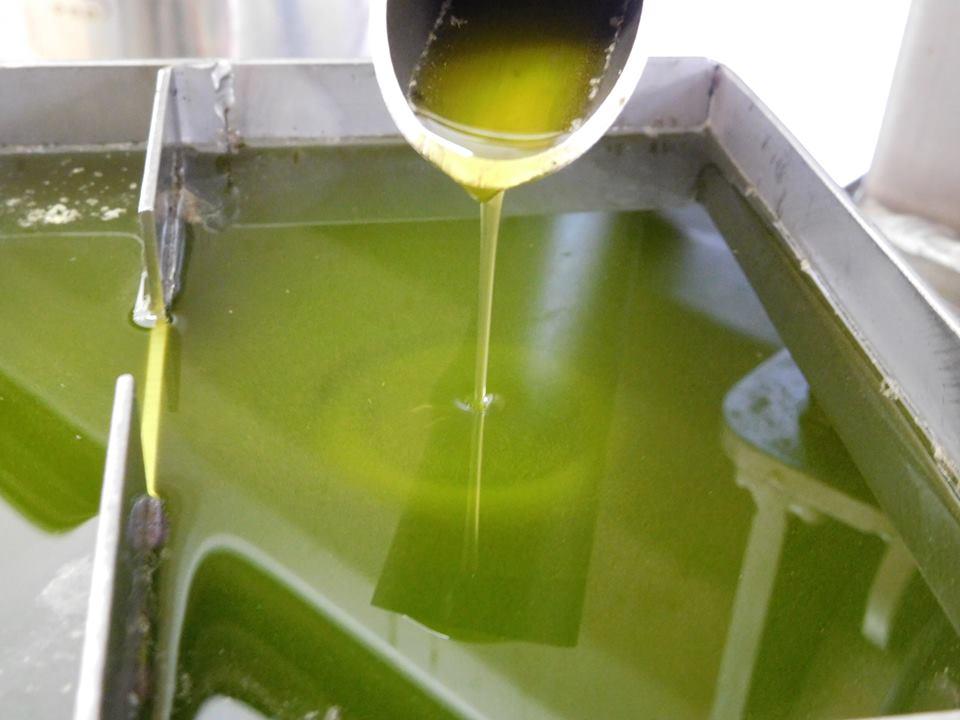 オリーブオイルで花粉症対策